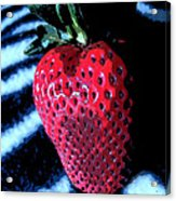 Zebra Strawberry Acrylic Print