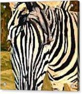 Zebra Stripes Acrylic Print