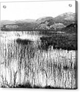 Zen Pond In Ireland Acrylic Print