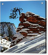 Zion National Park In Winter Acrylic Print