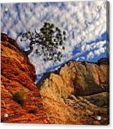 Zion Lone Tree Acrylic Print