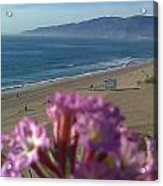 Zuma Beach Wildflower Acrylic Print