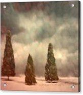 5 Pine Acrylic Print
