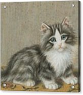 A Kitten On A Table Acrylic Print