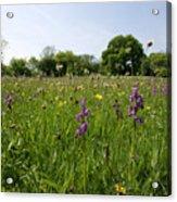 Ancient Hay Meadow Acrylic Print
