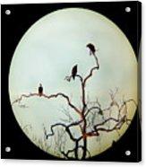 Bald Eagle And Two Juveniles Acrylic Print