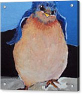 Bird With An Attitude Acrylic Print