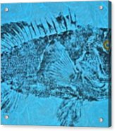 Black Sea Bass - Rockfish - Grouper Acrylic Print