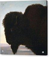 Buffalo Head Acrylic Print