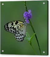 Butterfly On Flower  Acrylic Print by Sandy Keeton