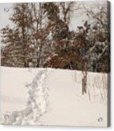 Christmas Snow Trail Acrylic Print