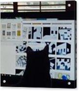 Critic Cat Acrylic Print