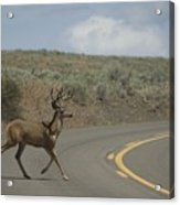 Deer 1 Acrylic Print