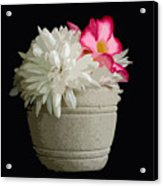 Desert Rose   Chrysanthemum And Adenium Obesum Acrylic Print