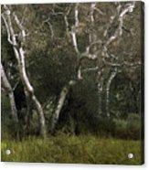 Dv Creek Trees Acrylic Print