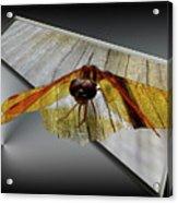 Eastern Amber Dragonfly 3d Acrylic Print