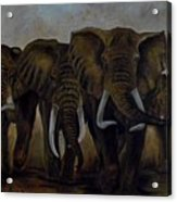 Elephant Herd Hurrying For A Drink Acrylic Print