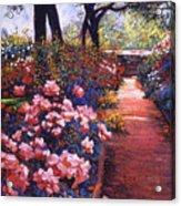 English Tea Roses Acrylic Print