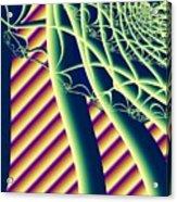 Fabaceae Acrylic Print