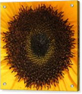 Florets Acrylic Print