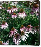 Flowers For Butterfly Feasting Acrylic Print