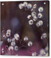 Fuzzy Fall  Acrylic Print