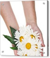 Giant Daisies For The Cosmetic  Industry Acrylic Print