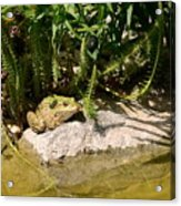Green Frog Sitting At The Pond Acrylic Print