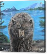 Hello Grizzley Bear Acrylic Print