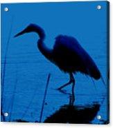 Heron In Water Acrylic Print