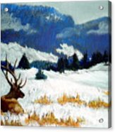 High Country Elk Acrylic Print