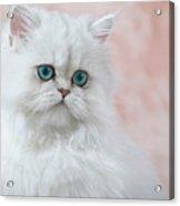 Kitten On Pink Acrylic Print