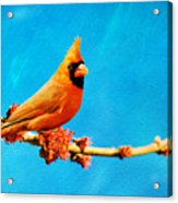 Male Northern Cardinal Perched On Tree Branch Acrylic Print