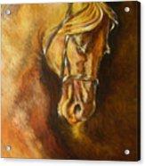 A Winning Racer Brown Horse Acrylic Print