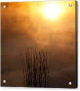 Mist And Lake Reeds At Sunrise Acrylic Print