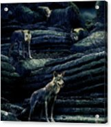 Moonlit Wolf Pack Acrylic Print