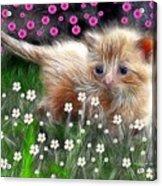 Mouse Hunter Acrylic Print