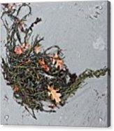 Natures Teapot # 2 Acrylic Print