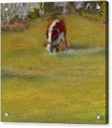 One Cow Acrylic Print
