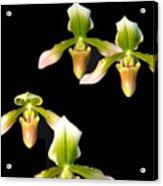 Orchid Quads Acrylic Print