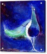 Peacock Blue Acrylic Print