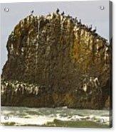 Pelicans' Rock Acrylic Print