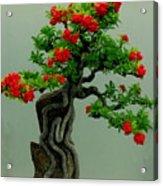 Red Berried Bonsai Acrylic Print