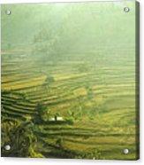 Rice Terrace  Acrylic Print