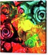 Roses 2 Acrylic Print