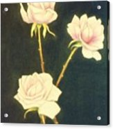 Roses In Full Bloom Acrylic Print