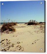 South Padre Island dunes Acrylic Print