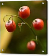 The Berries Of The Lily Of The Valley Acrylic Print