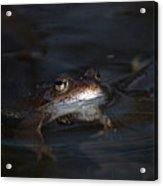 The Common Frog 1 Acrylic Print