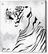 Tiger Animal Decorative Black And White Poster 3 - By Diana Van Acrylic Print
